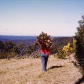 Picking Proteas - Blue Mountains NSW
