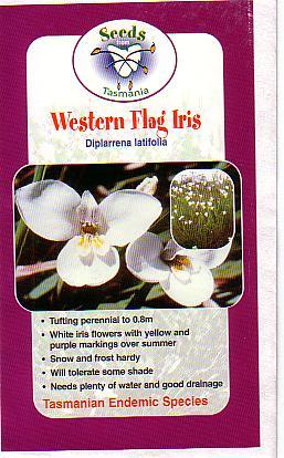 Diplarrena Latifolia Australian Native Plants Plants
