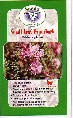 Melaleuca gibbosa • Australian Native Plants • Plants ... Green Tea Leaves