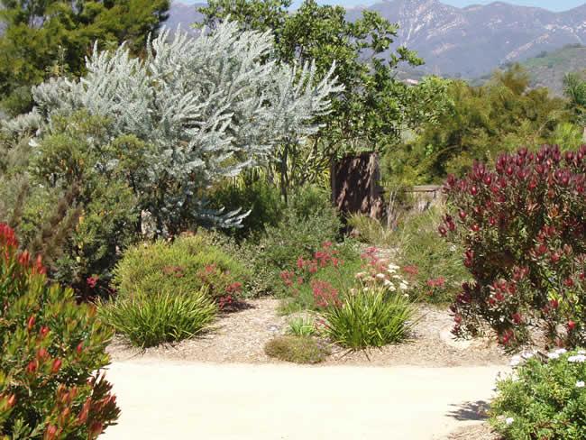 Win idea: Australian native landscape design melbourne