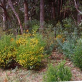 Landscape Revegetation NSW