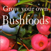 Grow Your Own Bushfood