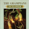 The Grampians in Flower