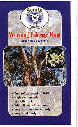 Eucalyptus Pauciflora Australian Native Plants Plants